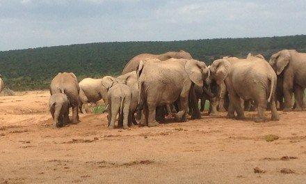 Addo National Elephant Park, RSA