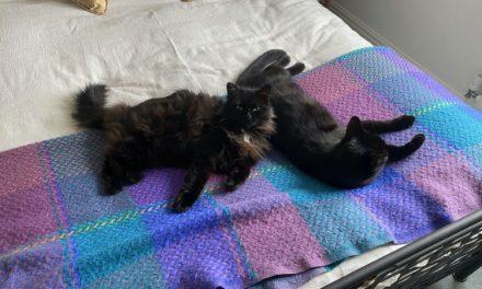 Cat comfort blanket
